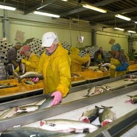 Рыбоперерабатывающий завод в собственность с землей